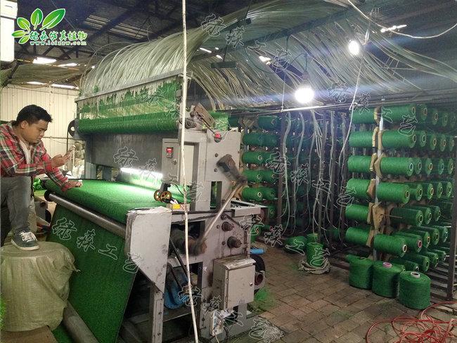 AG亚博地毯草坪生产图