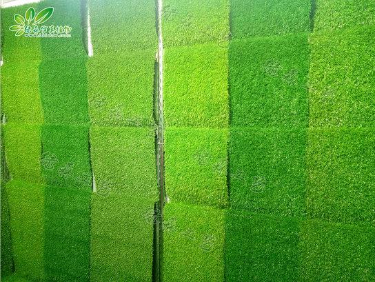 仿真地毯草坪05