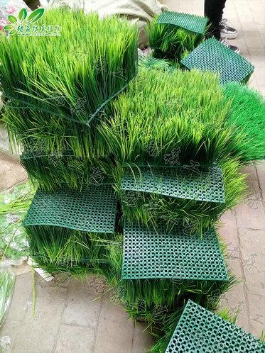 AG亚博草坪
