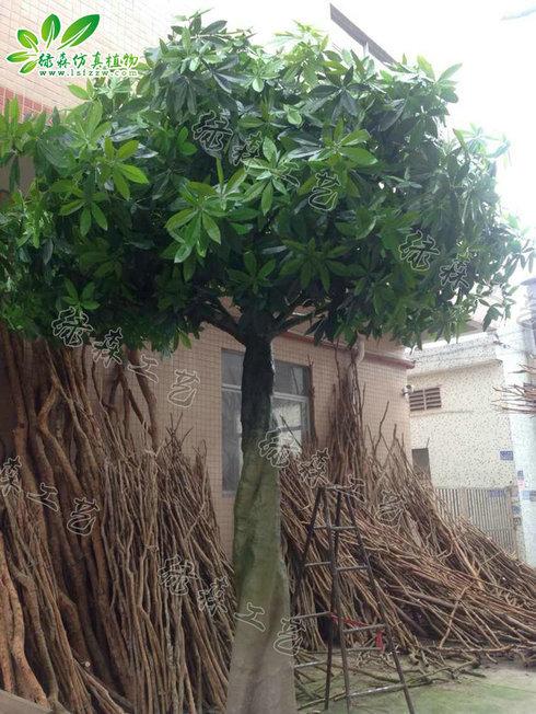 AG亚博大辫子发财树
