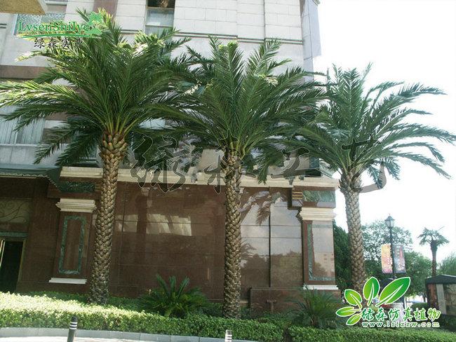 AG亚博海藻树03
