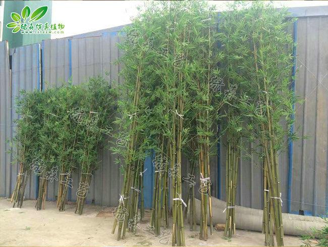 仿真竹子10