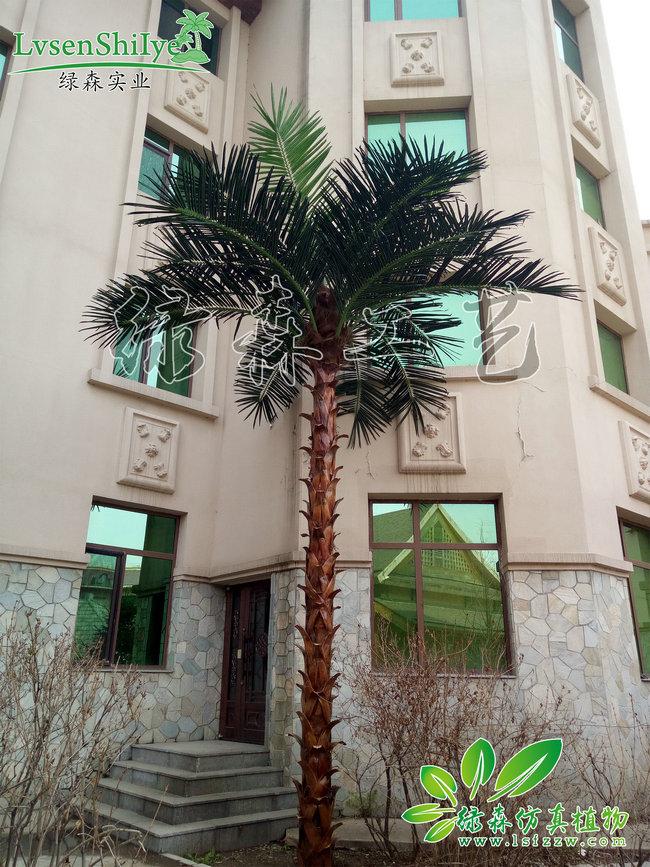 AG亚博室外棕椰树07