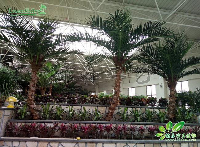 AG亚博棕椰树施工