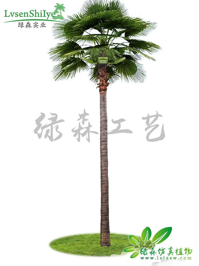 AG亚博棕榈树-老人葵