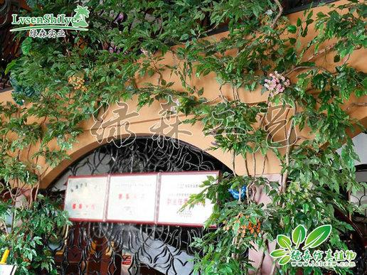 AG亚博植物墙20