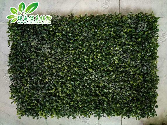 室外植物墙16