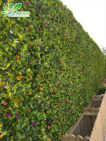 室外植物墙10