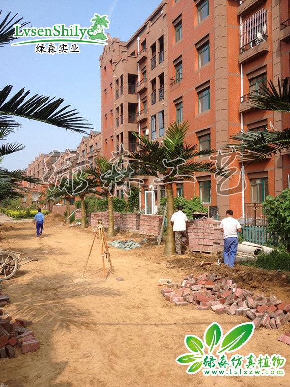 AG亚博椰子树-17