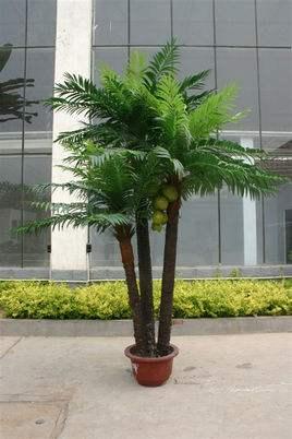 AG亚博椰树